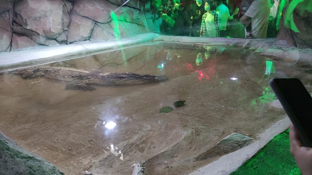 鳄鱼.jpg